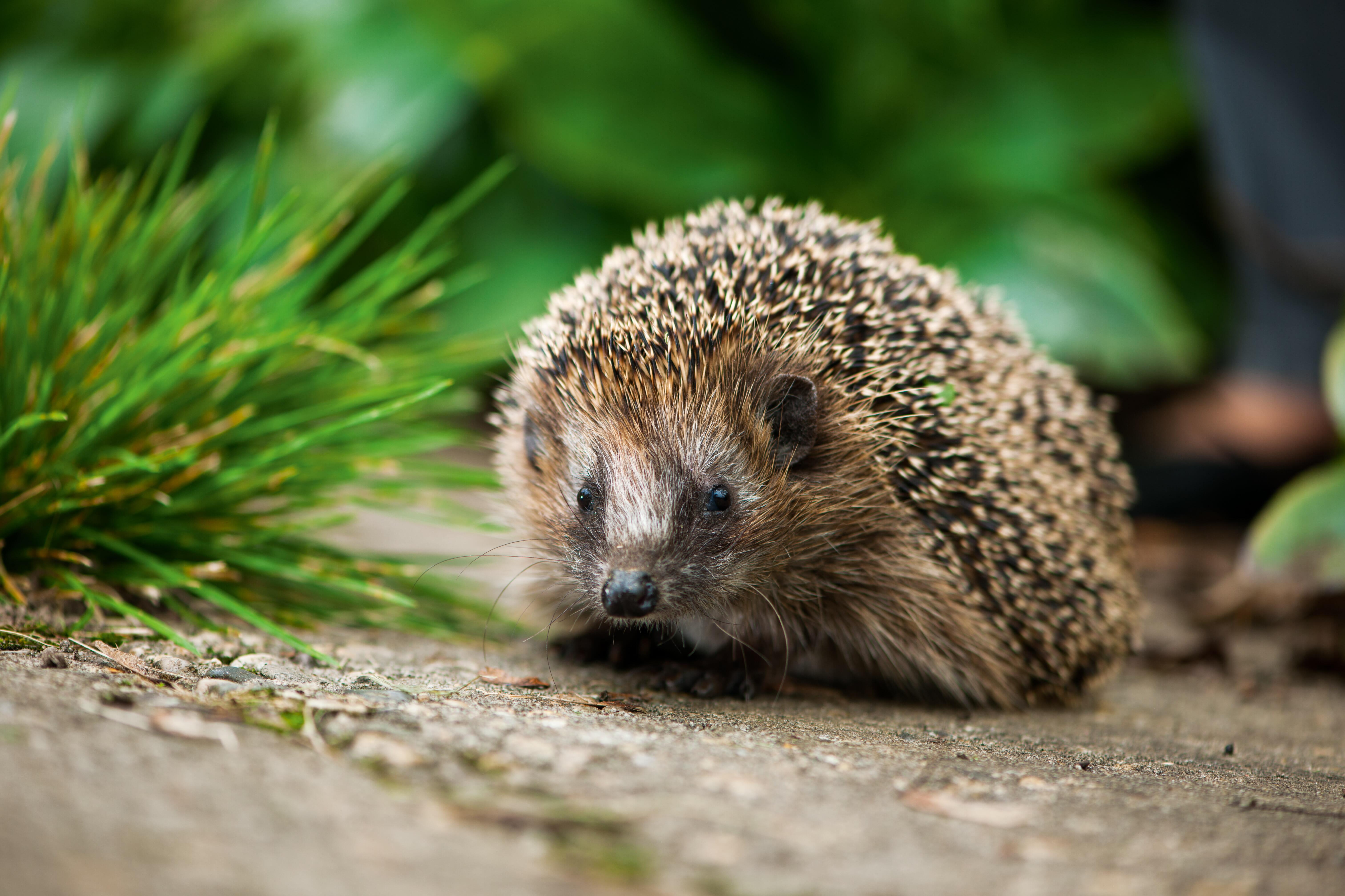 Wald- und Gartentiere