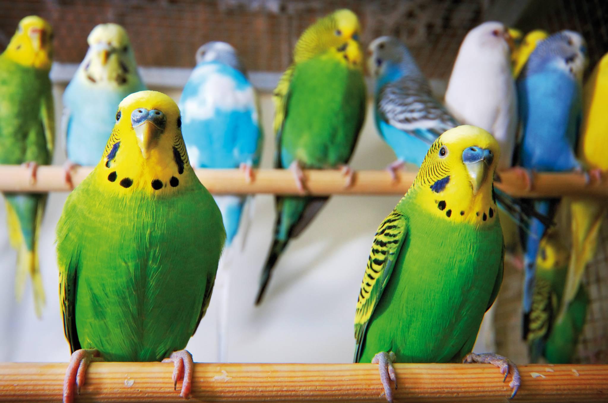 Käfig- und Volierenvögel